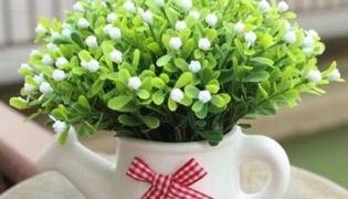 米兰花的养殖方法
