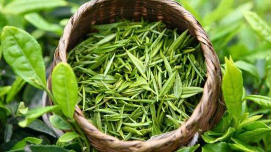 什么是绿茶