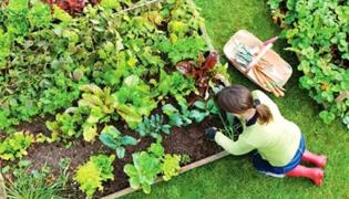 开垦土壤:苗圃养护管理