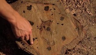 开垦土壤:树桩怎么处理