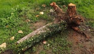 开垦土壤:怎样挖树桩