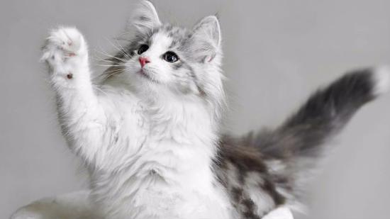 猫的寿命有多长