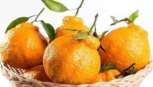 如何辨别耙耙柑和丑橘