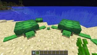 我的世界中海龟能吃什么