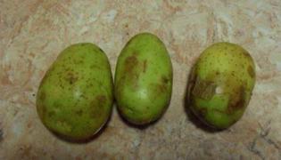 土豆变绿怎么办?