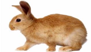 兔肉不能和什么一起吃