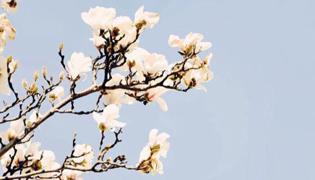 春分节气的特点