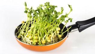 生绿豆芽有什么方法窍门