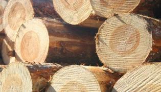 木头里面的虫子叫什么