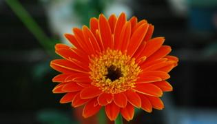 各种花的花语是什么