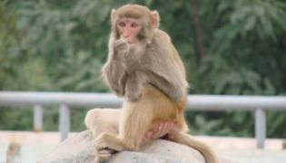 猴子的特征和特点