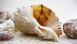 海螺肉怎么做好吃