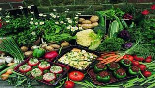 蔬菜批发市场为什么很难做