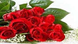 玫瑰怎么养