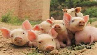 黑龙江省佳木斯市郊区长青乡发生非洲猪瘟疫情