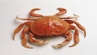 螃蟹養殖什么時間補鈣