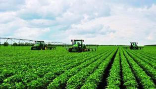 大豆种植时间