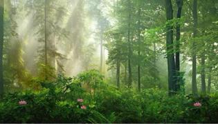 辉县花七森林是哪