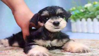 常见的狗狗种类