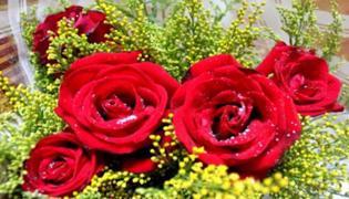 象征愛情的花有哪些
