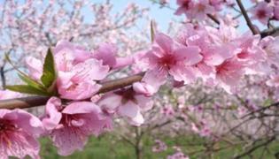 三月拾花酿春什么意思