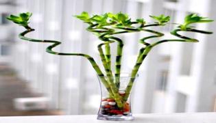 泡在水里的竹子是什么