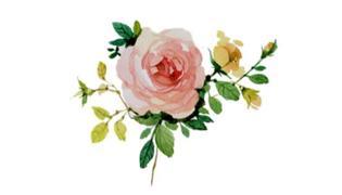 诗经中的植物意象有哪些