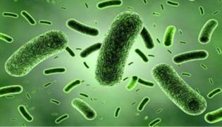 细菌的基本结构是什么