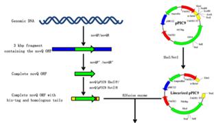 载体蛋白和通道蛋白的区别是什么