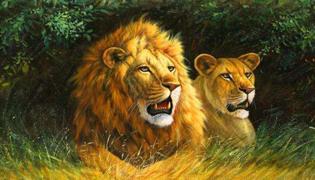 百兽之王是老虎还是狮子