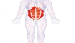 腹肌块数由什么决定