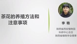 茶花的养殖方法