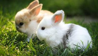 兔子公母有几种分辨法