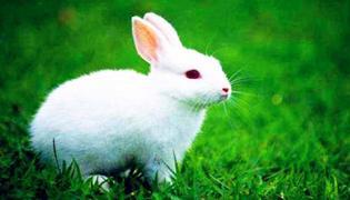 養殖兔子的技術有哪些