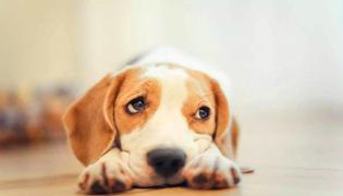 狗吃了老鼠药怎么办