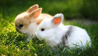 兔子假死会闭眼吗