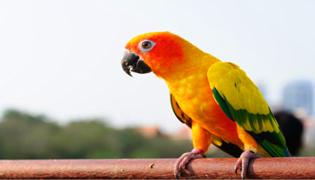 鹦鹉可以吃面包虫吗