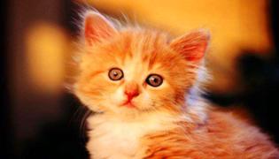 绿萝对猫有毒吗