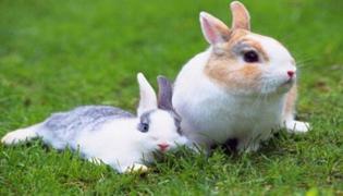 兔子喝什么水