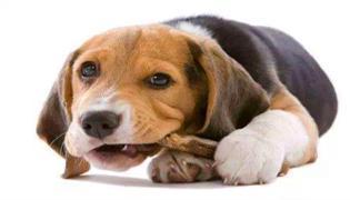小狗吃骨头卡住了怎么办