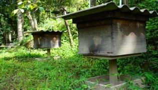 蜂箱进蚂蚊了有什么办法解决