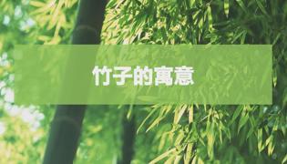 竹子的寓意是什么