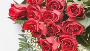 11朵玫瑰代表的意思