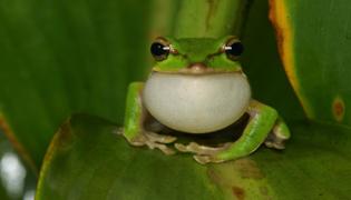 青蛙是变态发育还是完全变态发育