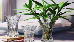 富贵竹刚生根能换水吗