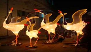 彩灯属于什么鸟