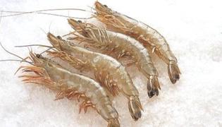 腐烂虾属于什么垃圾
