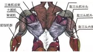 蝙蝠背阔肌怎么练出来