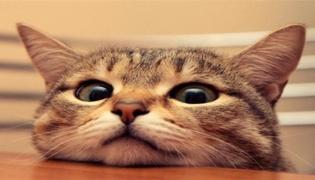 女人梦见猫是什么预兆