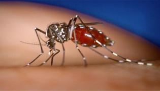 门口放什么东西可以驱蚊